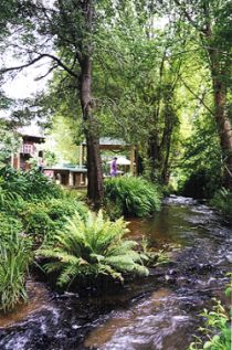 The stream at the back of the accommodation